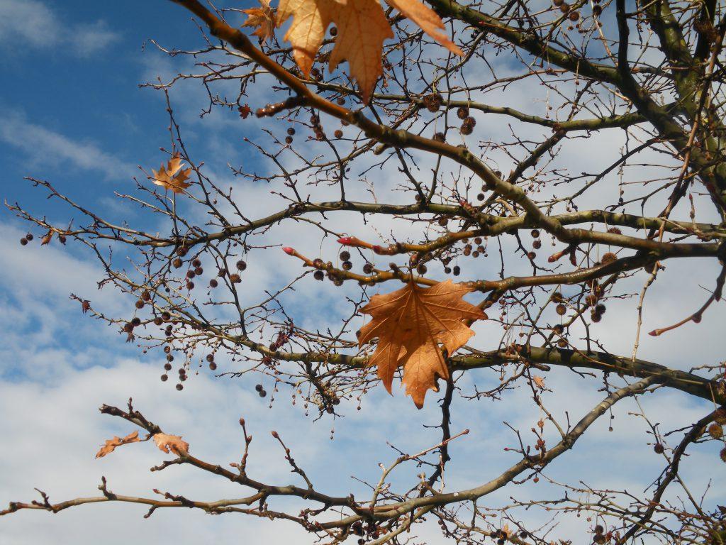 Outono na Grécia